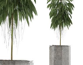 Single Plant 03 3D model