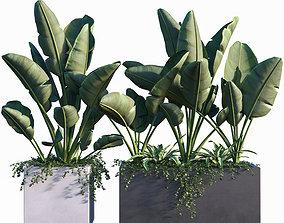 3D Plant set 02