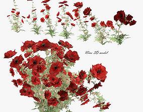 Flowers poppy 3D model game-ready
