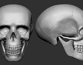 3D print model Human Skull