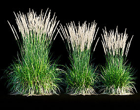 Feather reed grass leaf 3D model