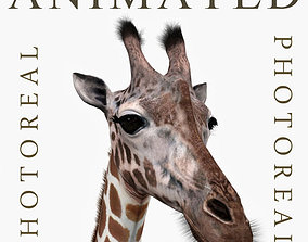 Photoreal HD Giraffe - 3d model animated