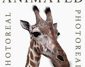 Photoreal HD Giraffe - 3d model animated savannah
