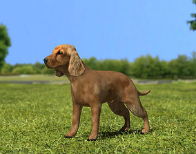 English Cocker Spaniel 3D model