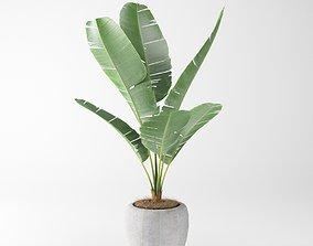 pot-plant banana plant 3d model