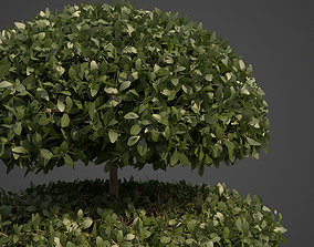 2021 PBR Common Boxwood Collection - Buxus 3D