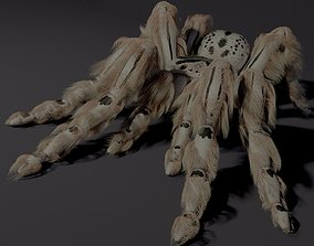 Evil white spider 3D model rigged