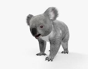 Koala HD 3D