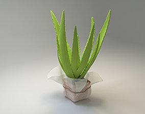 Aloe Vera Pot plant 3D asset