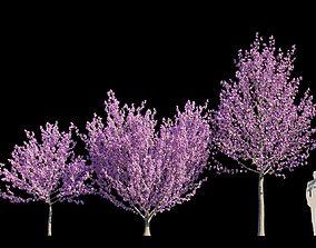 3D model Kwanzan Cherry