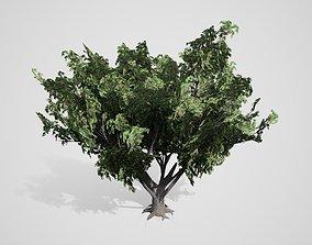 3D asset Black Elder Tree