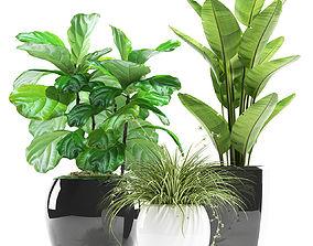 plants 119 3D
