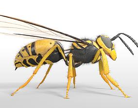 3D model Wasp Rigged Hairs
