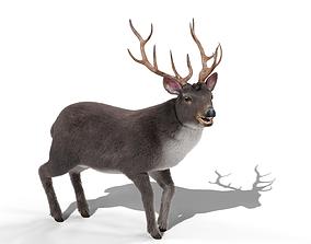 Fur Rigged Gray Deer Stag 3D asset