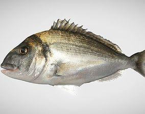 Bream Fish Dorade Royale 3D asset