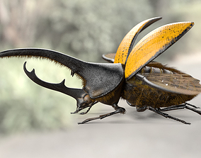 Hercules Beetle 3D asset rigged