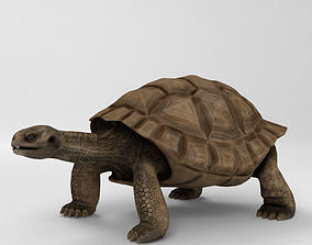 Galapagos Turtle High Detailed 3D model galapagos
