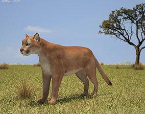 Cougar Puma Concolor 3D asset
