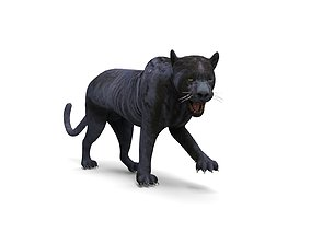 3d Wild Black Panther Rigged Model rigged