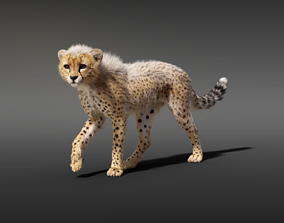 3D model Cheetah Young