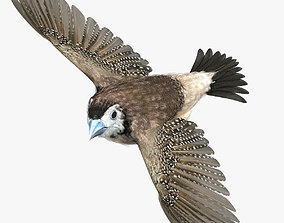 3D model Double-Barred Finch - rigged - animated