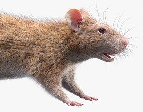 3D model Rat Fur Brown