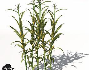 3D model XfrogPlants Corn
