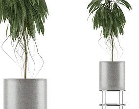 3D model Single Plant 18