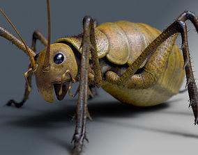 Cricket - giant weta 3D model