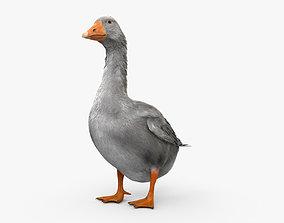 3D model Goose HD