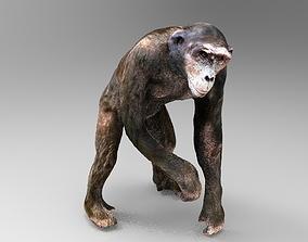 CHIMPANZEE mammal 3D