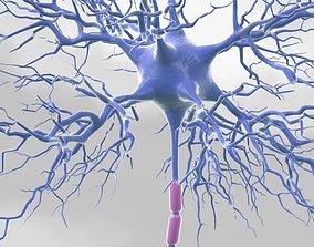 3D model Motoric Neuron