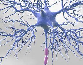 Motoric Neuron 3D model