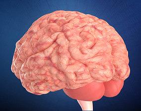 Human Brain 3D model system