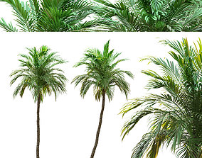 3D model Two Date palm tree