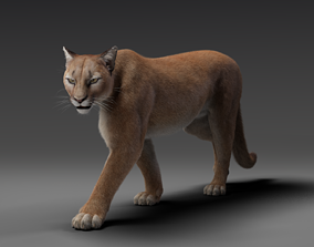 3D model Puma- Rigging and Animation