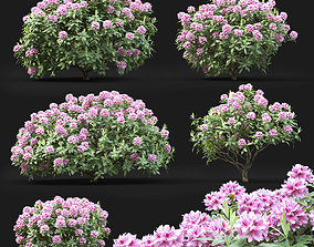 Rhododendron 01 3D