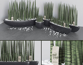 Set of Sansevieria cylindrica 3D model