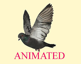 3D model Animated flying realistic pigeon bird - loop 1