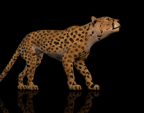 rigged Cheetah 3D model High Detailed Rigged and Textures