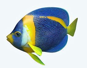 3D model Anglefish 8