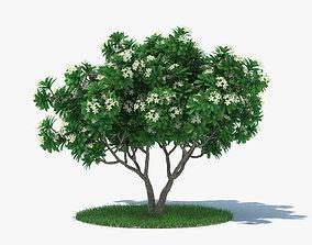 decoration Frangipani Tree 3D model