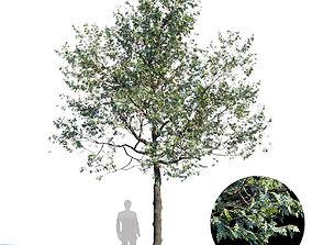 3D White Oak Var1