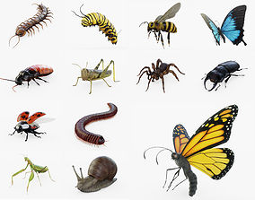 Insects Collection Rigged Lite 3D asset