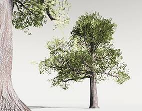 realtime EVERYPlant English Oak LowPoly 13 -- 10 Models