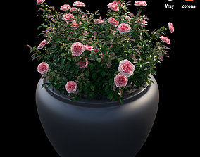 3D Rose plant in pot
