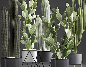Collection of Exotic Cactus Plants 376 3D