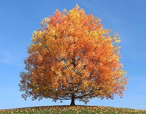 3D model Tree In Fall