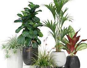 3D model Plants collection 363