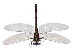 animal 3D printable model DragonFly